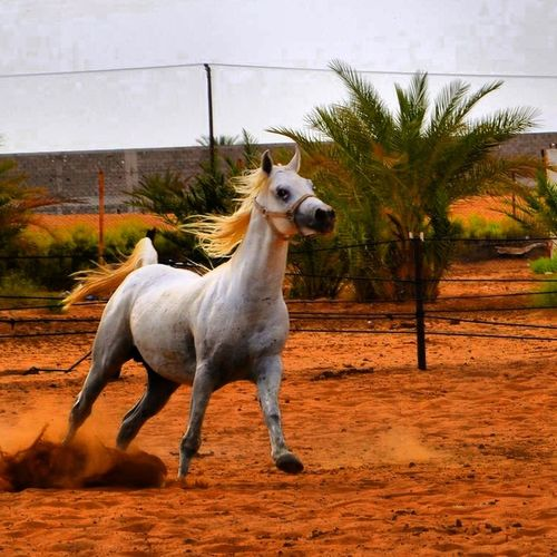 OurFarm Farm Alain Nikon #uae #horse