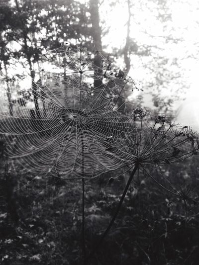 Spiderweb In Morning Dew Spiderweb Spiderman Morning Walk Water Beauty In Nature Nature Love It Was A Good Day