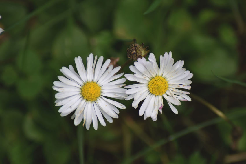 Animal Themes Beauty In Nature Close-up Day Flower Flower Head Flowering Plant Focus On Foreground Fragility Freshness Growth Inflorescence Insect Invertebrate Nature No People Outdoors Petal Plant Pollen Pollination Vulnerability  White Color