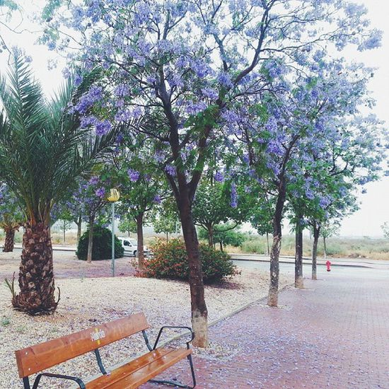 🌴🌸🌿Vscocam Vscospain Trees Flowers Park Nature Fall Bush Sky Fresh Rain Cloudy Air Relax Lonely Drops Bench Green Stroll Pebble Calm Outside SPAIN Murcia