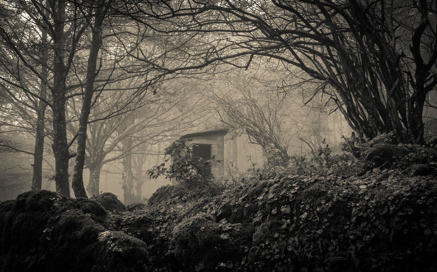 Autumn beech forest in Monte Cucco Atmosphere Autumn Ghost Mystic Nature Black And White Building Exterior Cabin Creepy Fog Foggy Forest Infested Landscape Monte Cucco Mountain Nature Nature_collection Park Pathway Plant Tree Trees Arch Umbria WoodLand