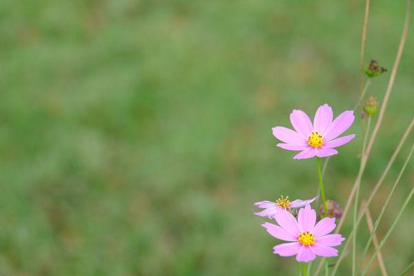 Flowering Plant Flower Freshness Fragility Vulnerability  Plant Beauty In Nature