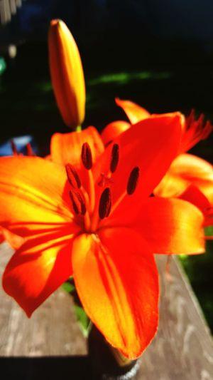 Flower Head Day