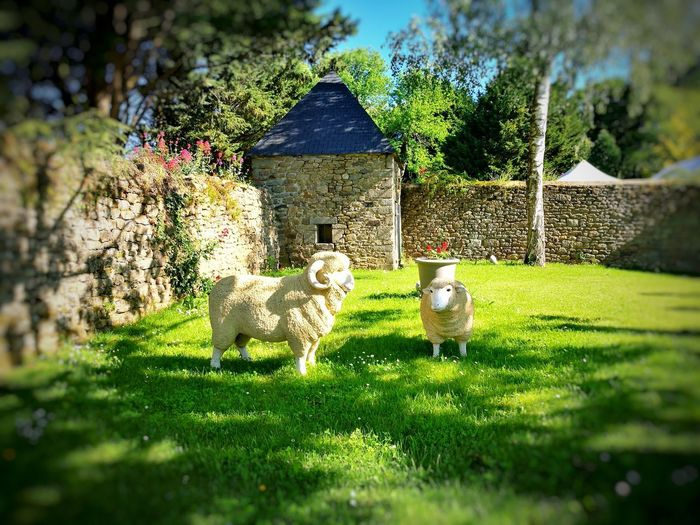 France Grass Outdoors Animal Themes Nature French Country