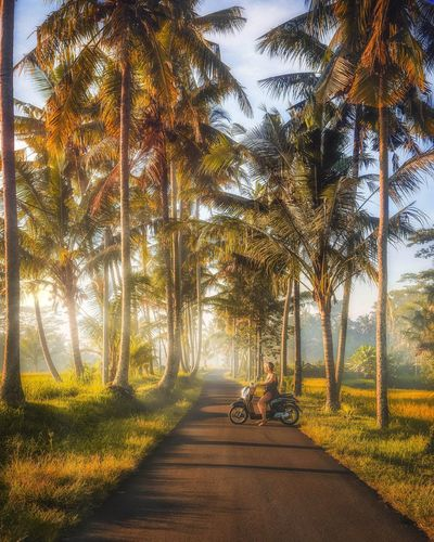 Travel Destinations Nature Nature Photography Wanderlust Sunrise Bali, Indonesia Morning Greenery Nature_collection INDONESIA Travel Exploring Landscape Adventure Motor Vehicle Motorcycle Palm Tree Glowing Mist Tree Sky Sunset Tranquil Scene Sun Countryside Sunbeam Scenics Pathway Shining Idyllic