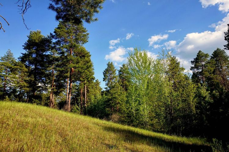 Showcase May Hello World Forest Forestwalk Walking Around Nice Day Spring 2016 Forest Photography Sky Sky And Clouds Sky And Trees Capture The Moment Nature Exceptional Photographs I LOVE PHOTOGRAPHY EyeEm Gallery Eyemphotography EyeEm Traveling Tree_collection  Beautiful Place ♥ From Russia With Love