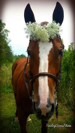 tequila♡shes so cute Nature EyeEm Best Shots Inspiration Horses