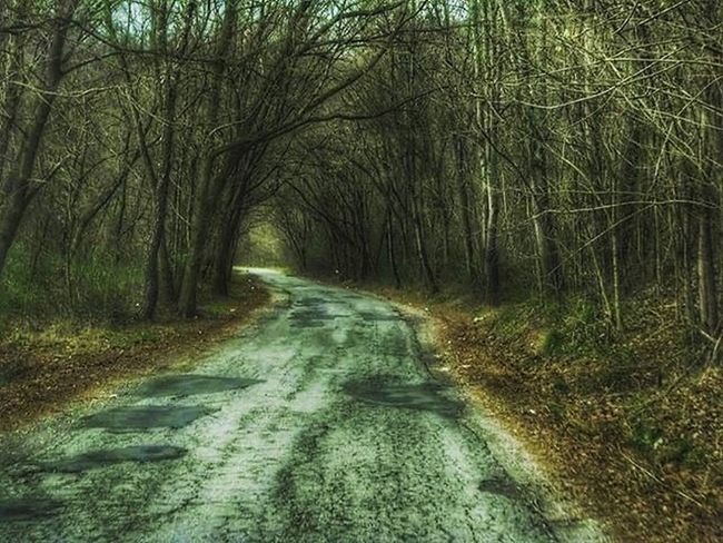 Scenic_roads Rsa_rural Scenicstates Westvirginia Photooftheday Jj_unitedstates Tv_rural Snapshots_daily Country_features Ig_addicts_fresh Ajl_rural Road_lovers Loves_adventure Igers_of_wv Wv_igers
