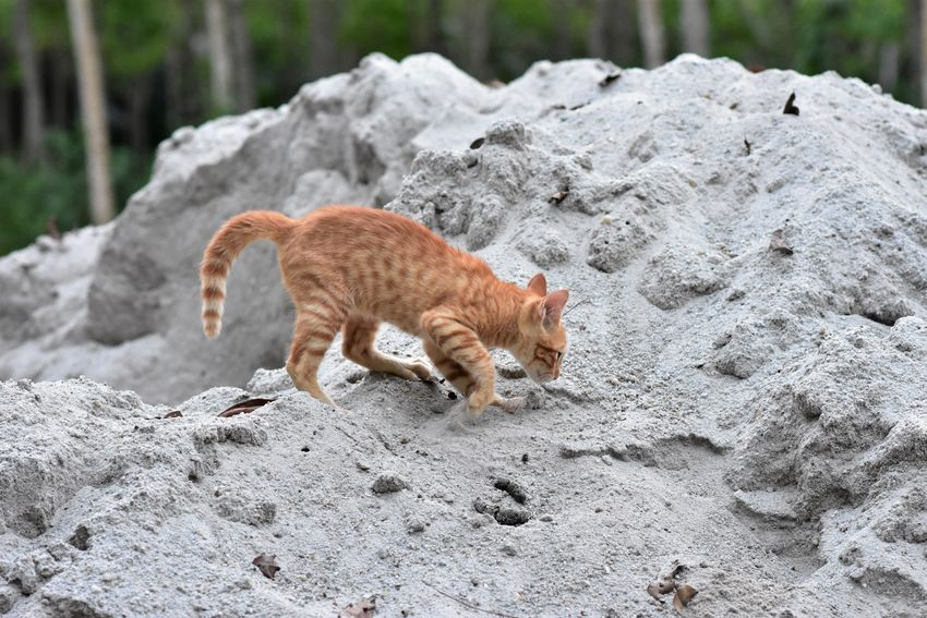 Kitten feces on sand. Natural Rejects Toilet Animal Animal Themes Cat Chittagong Day Domestic Animals Excrete Feces Feline Floor Jitty Kitten Mammal Mammals Nature No People One Animal Outdoors Pet Rock - Object Sand Smell