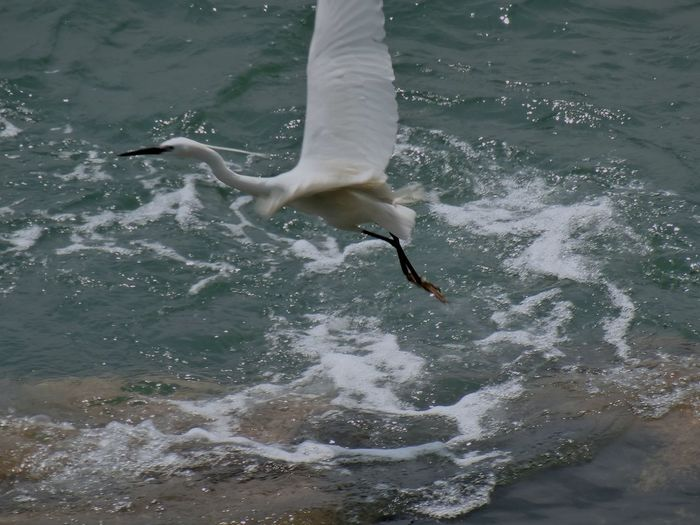 High angle view of egret flying over water