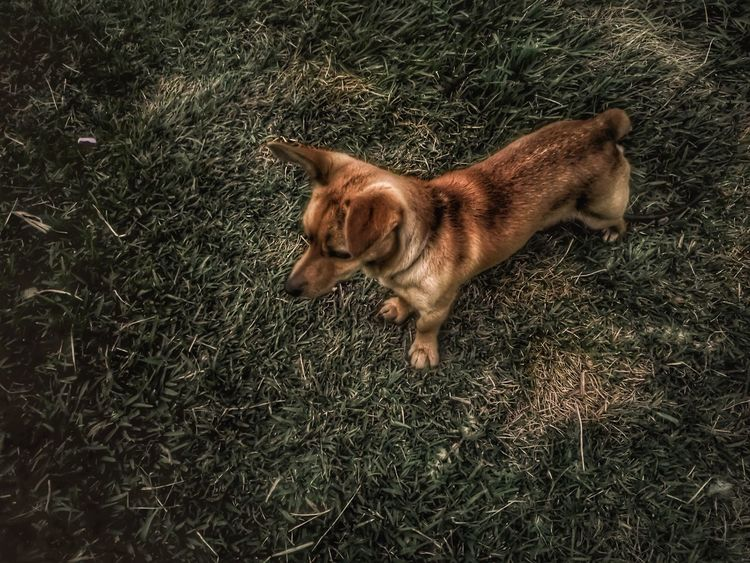 Mammal One Animal Animal Themes Domestic Animals Pets Dog High Angle View No People Portrait Outdoors Day Eye4photography  Setúbal Portugal EyeEm Gallery EyeEm Best Shots Freshness Capture The Moment Capturedonp9 HuaweiP9