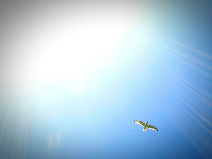 Sun ☀ Sky Bird Blue Sky Animals Vogel Nature Blauer Himmel Hello World Schönes Wetter