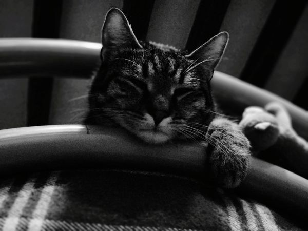 Hi Bw Bw_collection Bw_lover Bwphotography Home Cat Cats Of EyeEm Cat Lovers Close-up Pet Portraits Indoors  Sleeping Siesta House Interior EyeEm Selects Pets Feline Domestic Cat Relaxation Lying Down Home Interior Sleeping Close-up