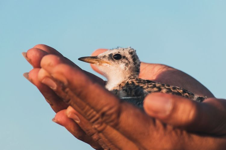Cropped image of hand holding bird against sky
