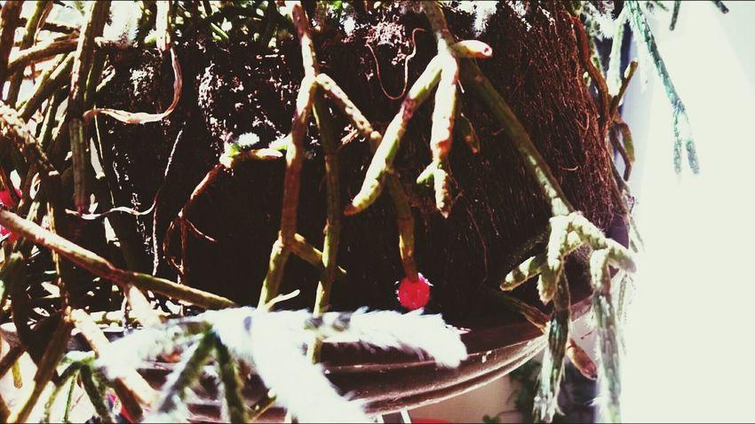 """Flor """" pintor de macaco"""". Nature Flower"""