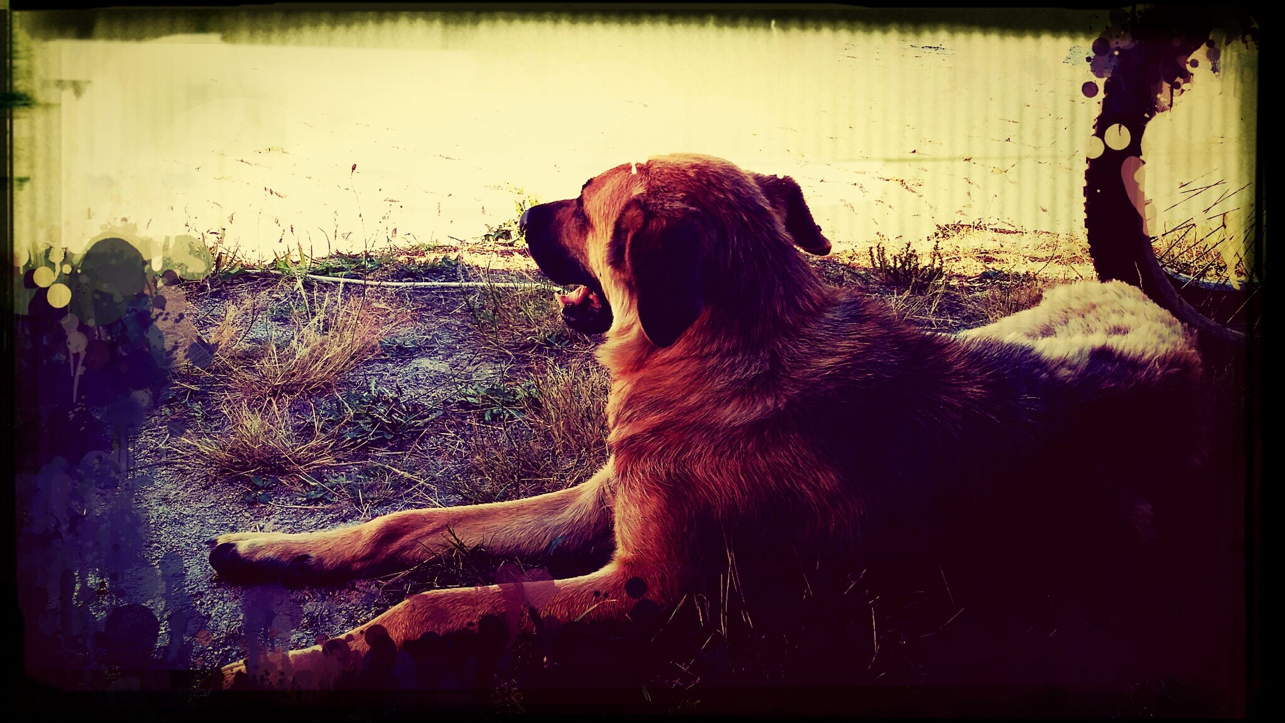 animal themes, domestic animals, transfer print, mammal, one animal, pets, auto post production filter, dog, relaxation, no people, wall - building feature, outdoors, side view, zoology, standing, day, full length, sitting, looking away, brown