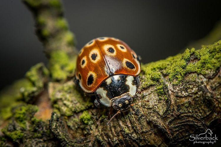 Macrophotography Ladybugmacro Ladybugs Photography Ladybug🐞 Ladybug Close-up Nature Photograhy Macro Photography Insect