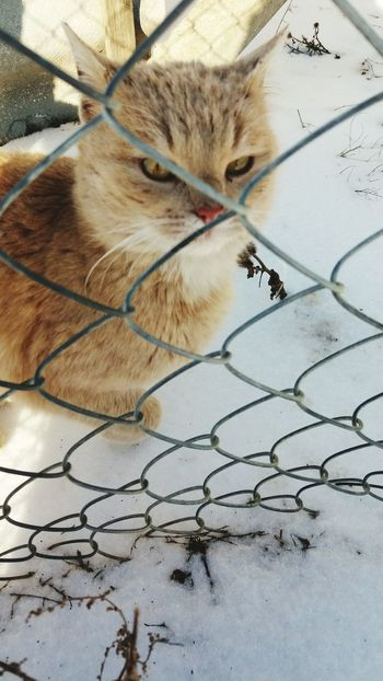 Meaux One Animal Animal Themes No People Domestic Cat Domestic Animals Mammal Cage Close-up Outdoors Pets Day Nature