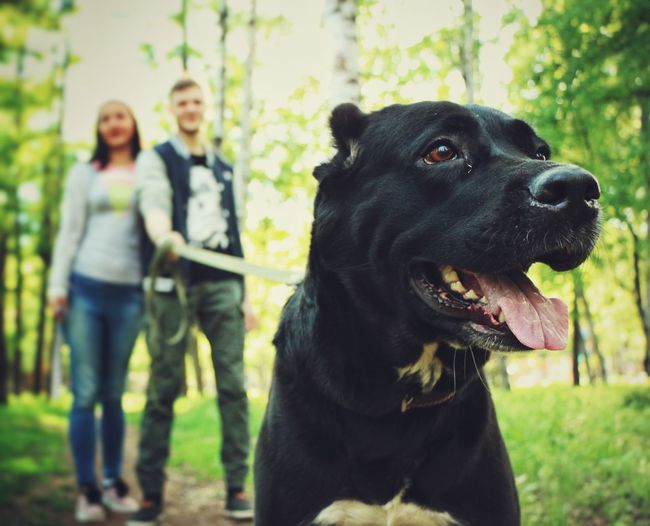 Dog Pets Togetherness Smiling Domestic Animals Portrait Black Labrador People Black Color Happiness Real People Real Life Day Low Angle View