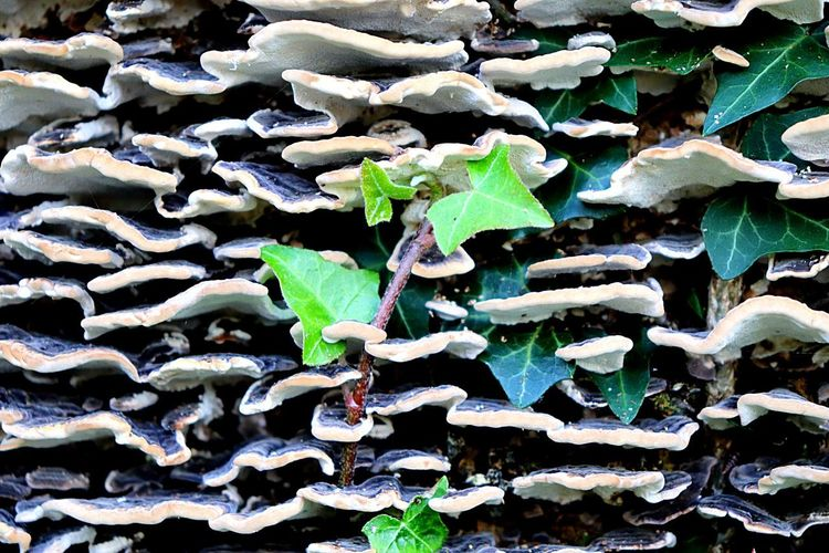 Fungus Growth Plant Part Leaf Plant Nature Day Full Frame Close-up Beauty In Nature Outdoors Backgrounds Pattern No People