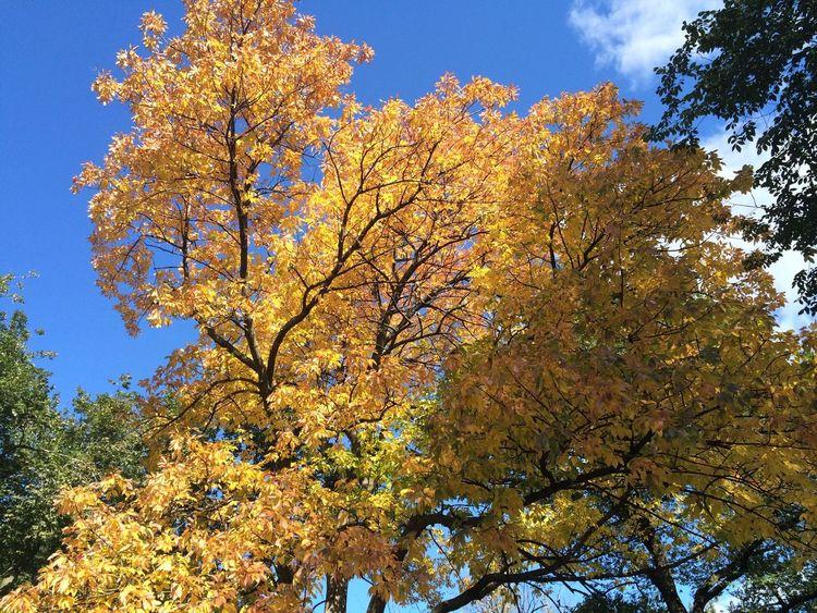 Autumn NYC