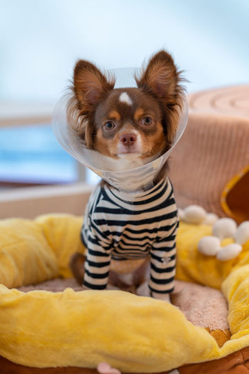 Portrait of puppy with clothing