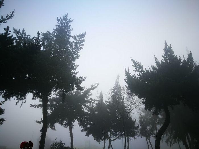 niebla Bogotá,
