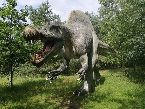 Dinosaur Park Dinosaur Dino's Photography Dino No People Nature Animal Themes Mammal
