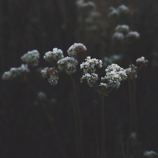 Flower Beauty In Nature Nature Plant Close-up Outdoors Black Background Moody Mood Tone Moodygrams Moody Nature Stock Photo Nealnoahphotography Floral Instagram Pics Contrast No People Southern California California Edgy Grunge Dark Perspective