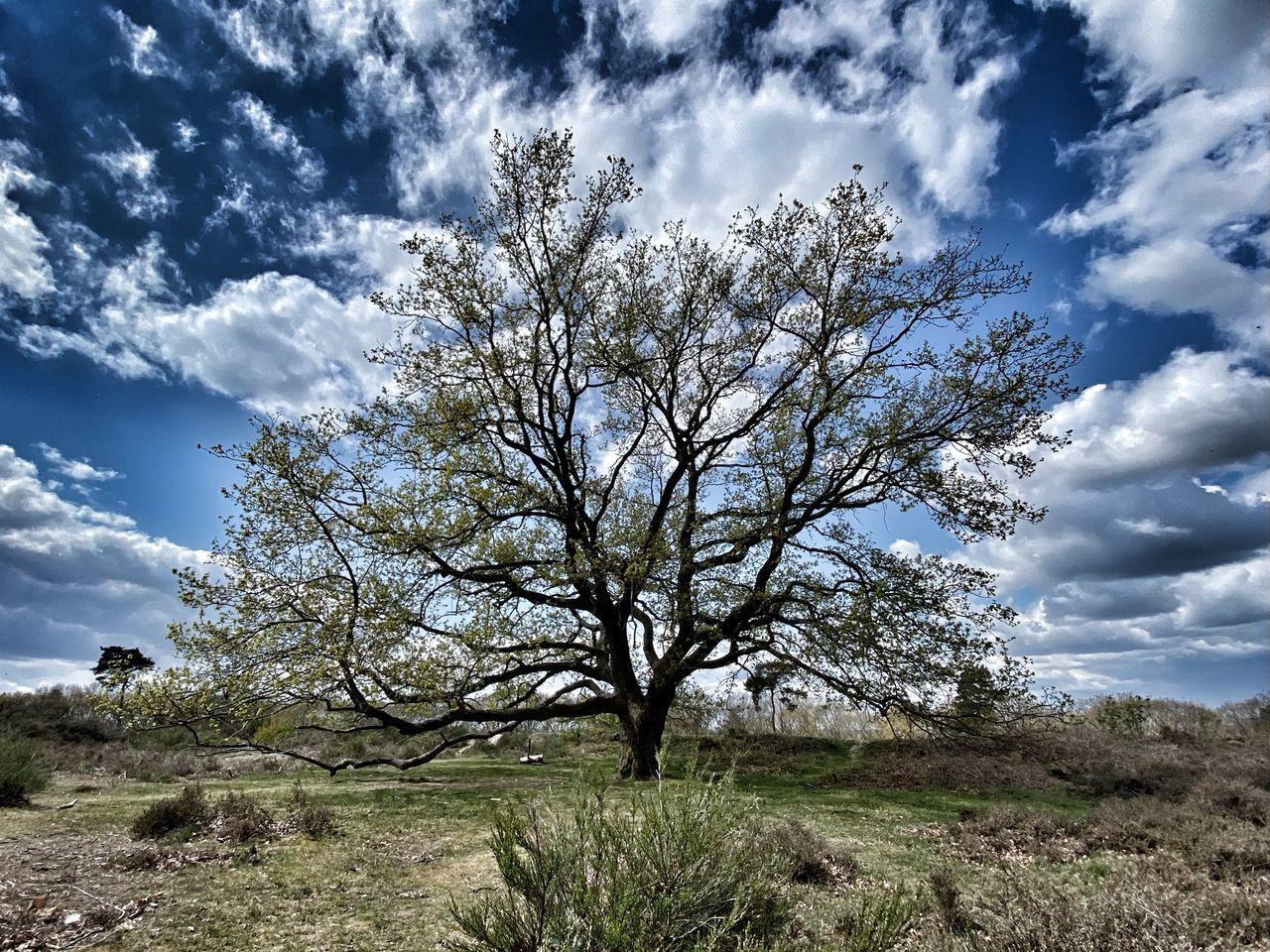 TREE IN FIELD AGAINST CLOUDY SKY