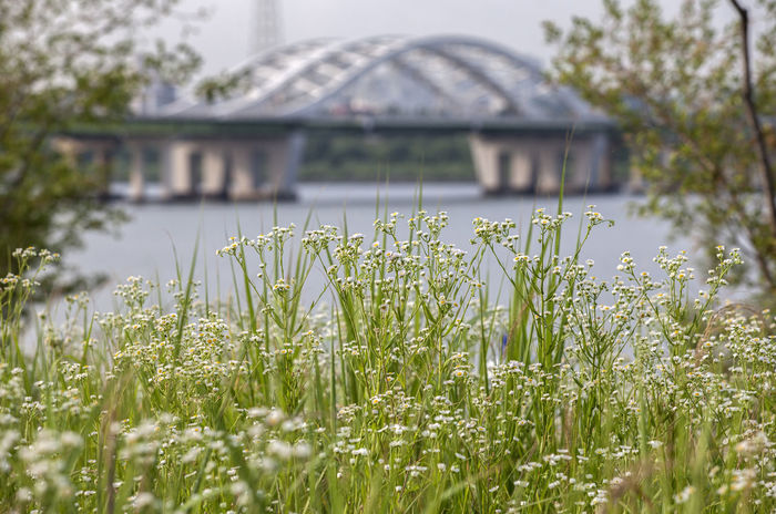 Beauty In Nature Blossom Close-up Dangsan Day Flower Focus On Foreground Fragility Freshness Grass Green Growing Han River Hangang In Bloom Nature No People Outdoors Plant Riverside Selective Focus Sky Stem Tranquility Wild Flowers