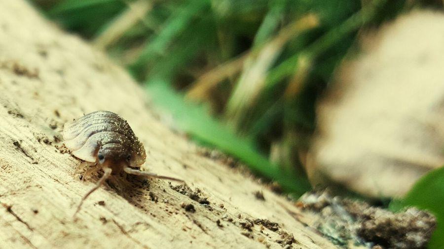 Slaters Wildlife Zoology Close-up Animal Crawling Outdoors Selective Focus Macro