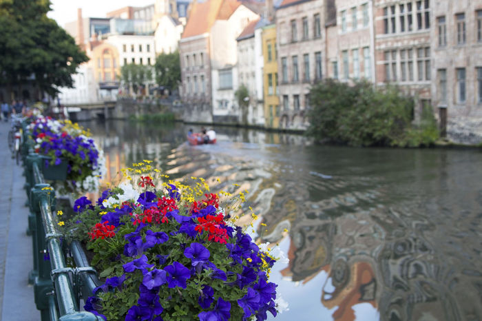 Canals and flowers in Ghent, Belgium (2015) Flower Outdoors Water Multi Colored Plant Day No People Freshness Belgium Canals Gent Flandres  Breathing Space EyeEmNewHere The Week On EyeEm Your Ticket To Europe An Eye For Travel The Traveler - 2018 EyeEm Awards
