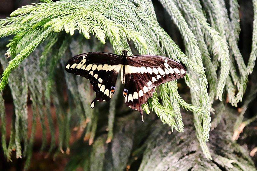 Insect Animal Wing Invertebrate Animal Themes Animals In The Wild Animal Animal Wildlife One Animal Nature Butterfly - Insect No People Beauty In Nature Plant Day Leaf Plant Part Close-up Animal Markings Outdoors Growth