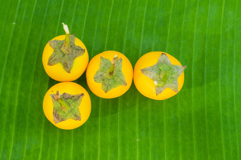 High angle view of yellow fruits on leaves