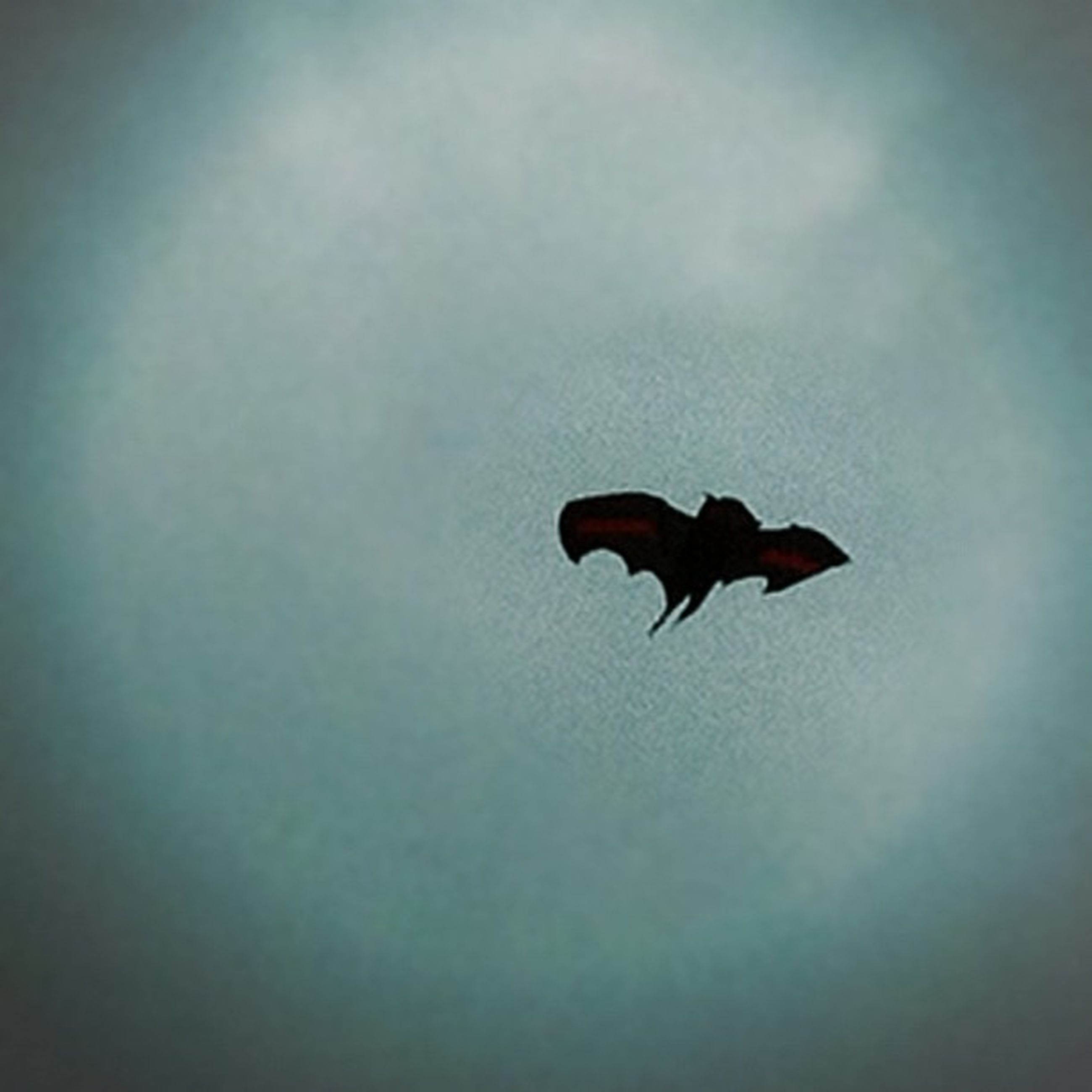 flying, mid-air, animal themes, low angle view, one animal, animals in the wild, silhouette, wildlife, spread wings, sky, full length, nature, insect, outdoors, copy space, day, beauty in nature, cloud - sky, motion, freedom