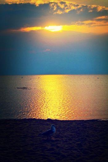Beach Sunset EyeEm Nature Lover Nordic Light