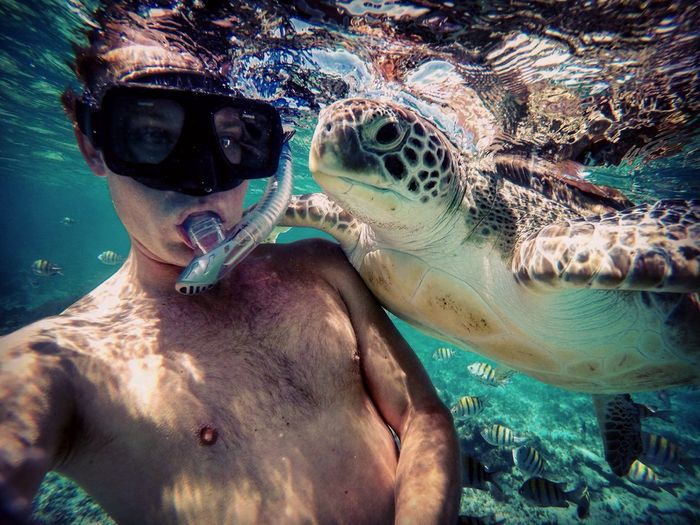 Shirtless young man snorkeling with turtle undersea