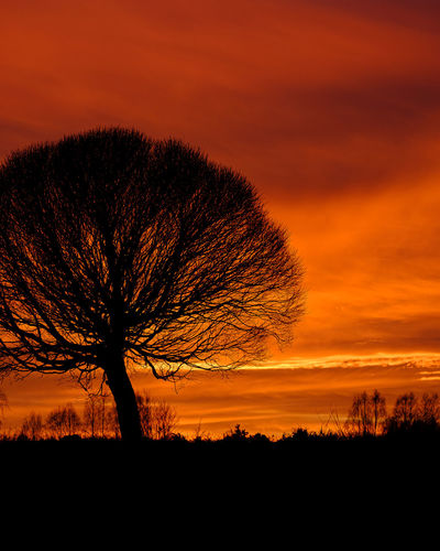 Silhouette tree on field against romantic sky at sunset