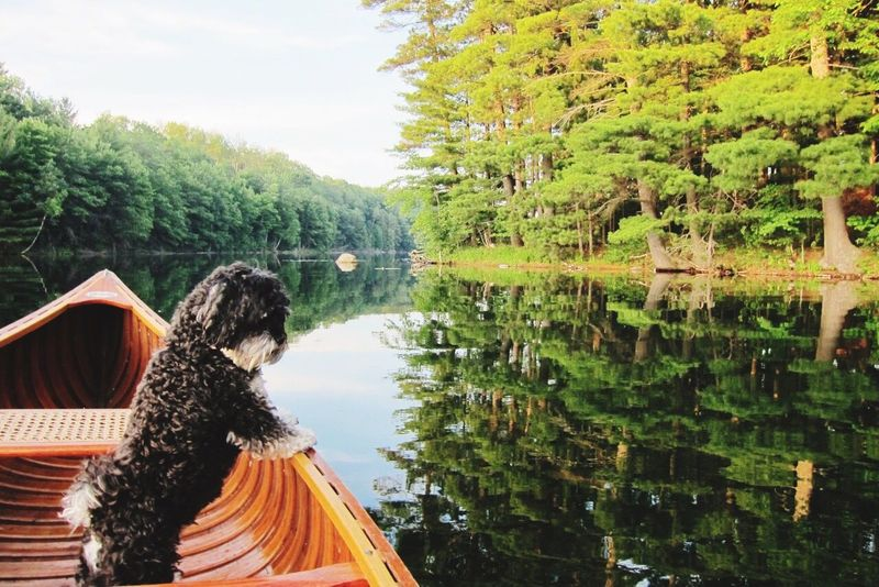 Dogs I Love My Dog Lake Water Reflections Northern Wisconsin EyeEm Nature Lover Reflected Glory Reflection Canoe Dogslife Summer