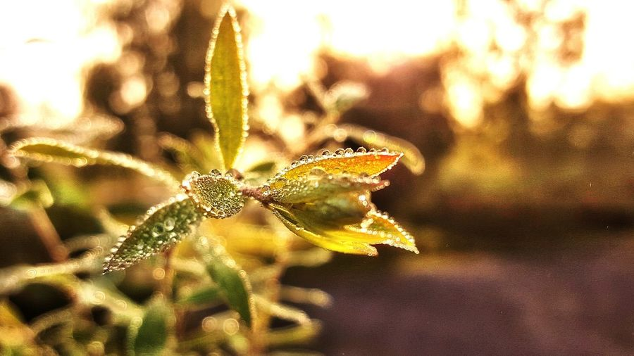 Macro Close-up Close Up Closeupshot Leaf Samsung S6 Nature Water Drops