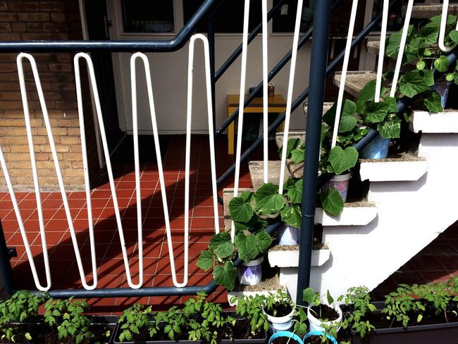 Urban Gardening Stairs Pop-up Plants Tomatoes Cucumbers Adapted To The City