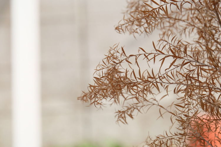 Close-up of plant against window during winter