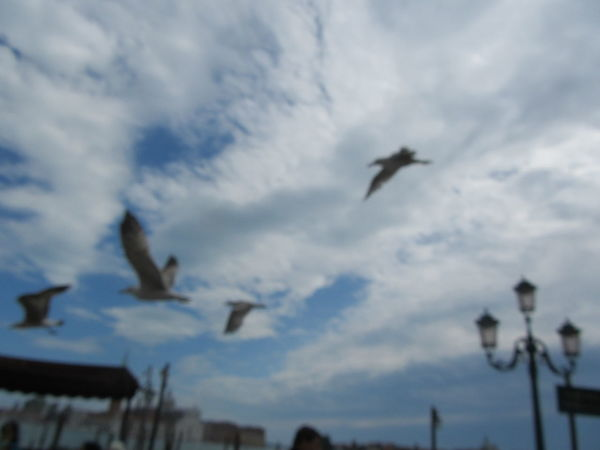 Nofocus  Focus Blur Blurred Motion Birds Birds Of EyeEm  Venice, Italy Sky Details WeekOnEyeEm Art Is Everywhere Personal Perspective Love To Travel No People City EyeEmNewHere Travel Photography Day Flying Bird Seagulls The Street Photographer - 2017 EyeEm Awards The Great Outdoors - 2017 EyeEm Awards