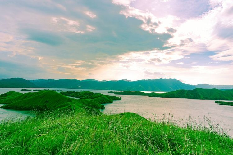 Landscape Tea
