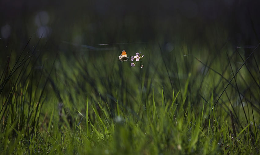 Close-up of insect on grass in field