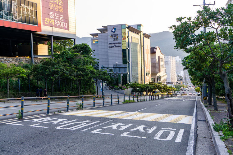 Road by trees and buildings in city