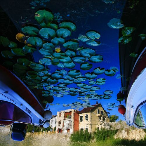 Reflections Yansıma River Riverside Nature Nature Photography Reflections In The Water Scenery Naturelovers VirpazAr Montenegro Nilüfer çiçeği Blue Mavi Upside Down Building Exterior