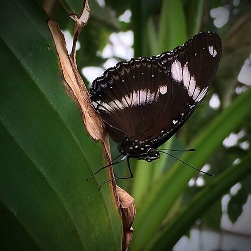 Butterfly Insect Close-up Nature No People Animal Themes One Animal Wildlife Focus On Foreground Animal Antenna Perching Animal Wing Beauty In Nature Zoology Tranquility