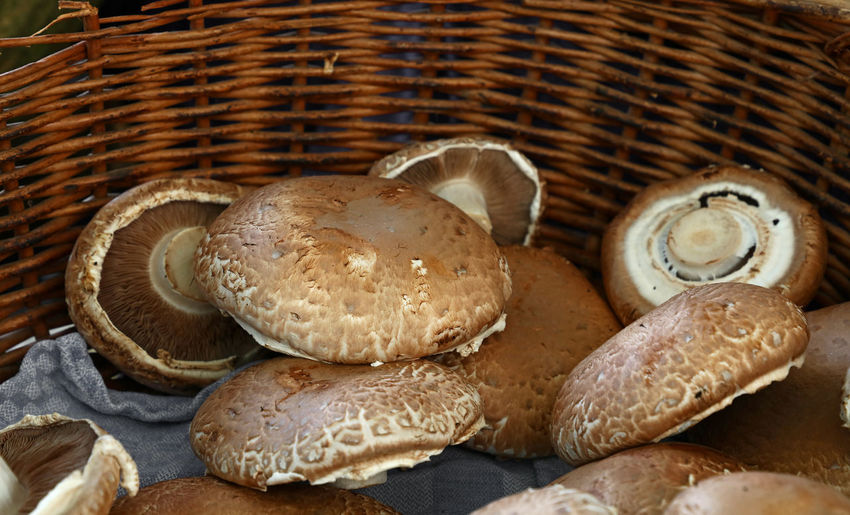 Brown portabello champignon Market Place PortabellaMushroom Basket Brown Champignon Champignons Close-up Container Edible Mushroom Food Food And Drink Fresh Freshness Healthy Eating Indoors  Ingredient Market Stall Mushroom Organic Organic Food Portabello